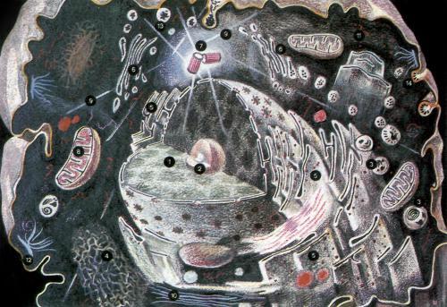 Клетка - конвейер создания новых знаний.